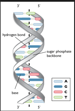 dna base pppp