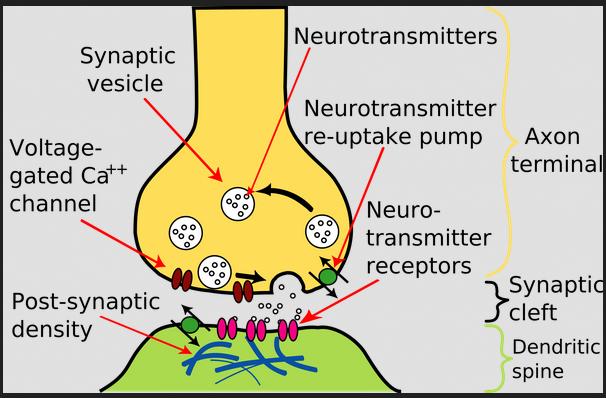 synapse bart simpson upside -down cartoon TV